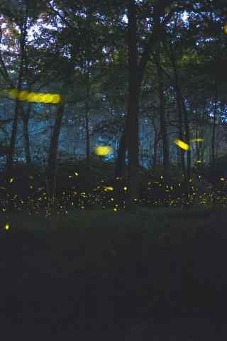 夏夜林间萤火虫手机壁纸图片下载