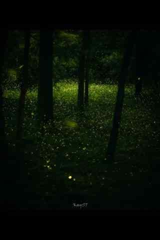 夜晚林间萤火虫手机壁纸