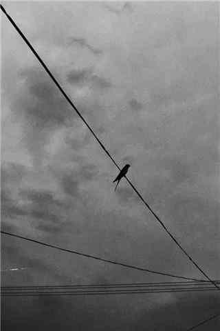 黑云密布的天空下的小燕子手机壁纸
