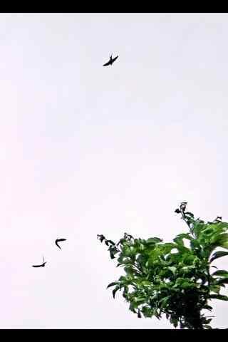 天空中飞翔的小燕子手机壁纸