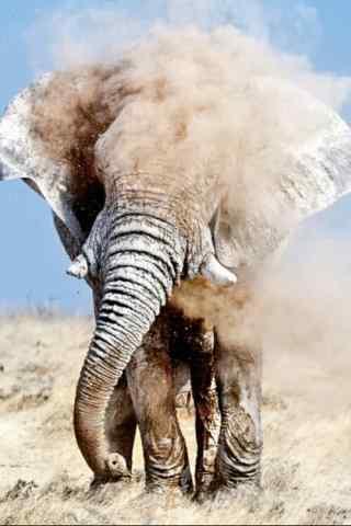 创意大象摄影图片
