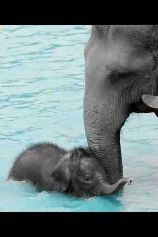 可爱的大象母子水