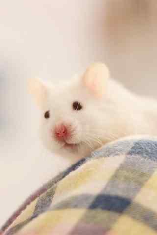 沙发上的可爱小白