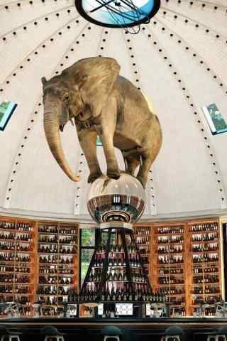 想要飞翔的大象手