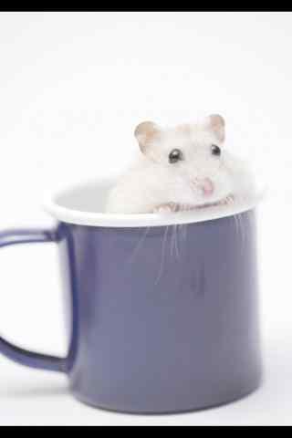 杯子里的可爱小白