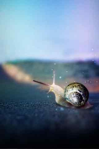 唯美蜗牛图片手机壁纸