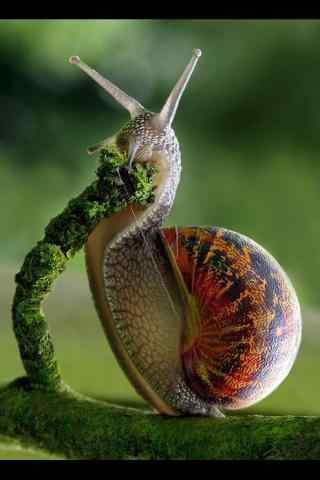 文艺艺术摄影蜗牛图片手机壁纸