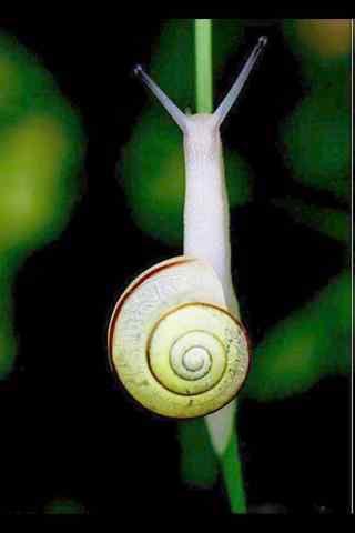 蜗牛摄影图片手机壁纸