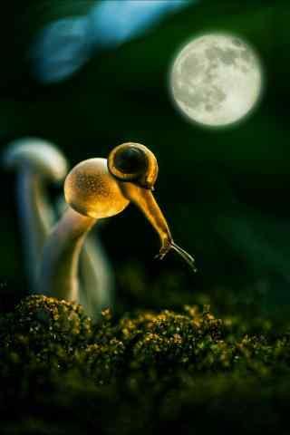 艺术摄影之月下蜗牛手机壁纸