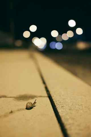 唯美的小蜗牛图片手机壁纸
