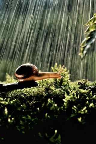 风雨中坚强的小蜗牛图片手机壁纸