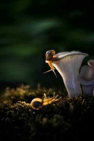 月下蜗牛文艺图片手机壁纸