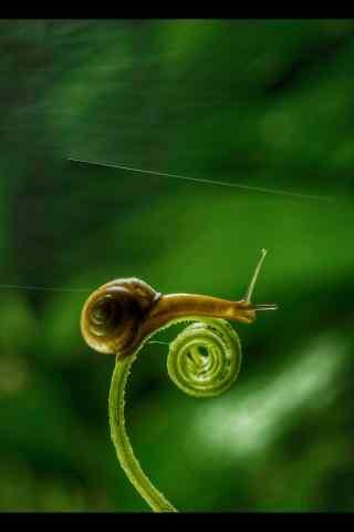 萌萌哒可爱小蜗牛护眼手机壁纸