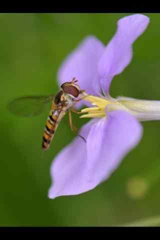 微距花朵与昆虫手