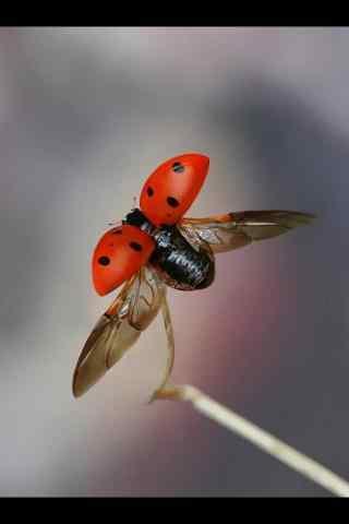 微距起飞的昆虫手