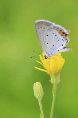 微距采蜜的蝴蝶手