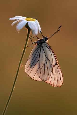 微距蝴蝶手机壁纸