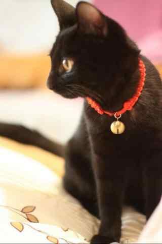 黑猫铃铛项圈图片桌面壁纸