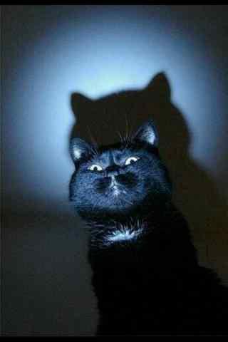 黑猫搞怪可爱图片手机壁纸