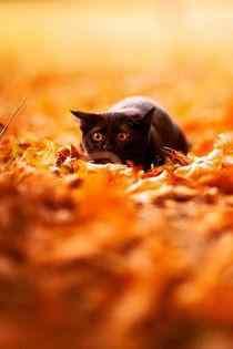 黑猫可怜眼神高清图片手机壁纸