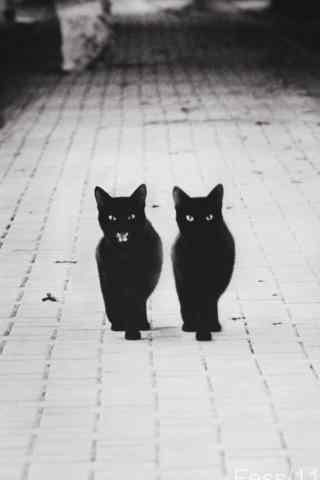 黑猫两只小猫霸气走来简约图片手机壁纸