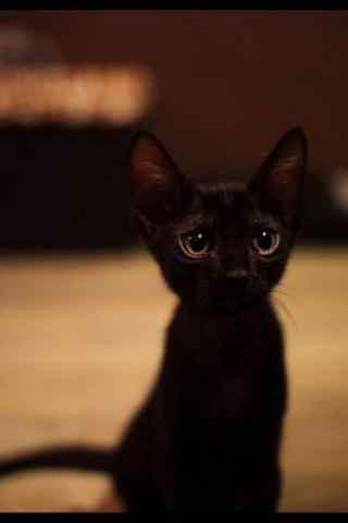 黑猫卖萌无辜眼神手机壁纸
