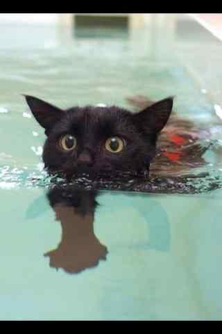 黑猫游泳卖萌图片桌面壁纸