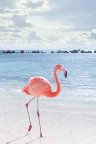 粉色火烈鸟海边唯美高清图片手机壁纸