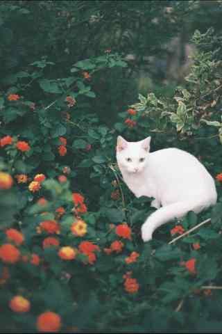 猫咪与花朵唯美图