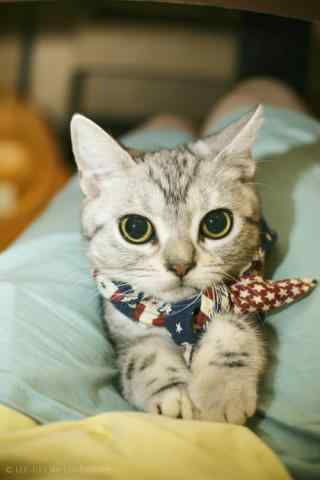 打领结的猫咪可爱