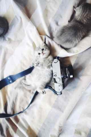 可爱的小猫咪卖萌
