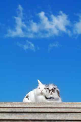 两只可爱的垂耳兔图片手机壁纸
