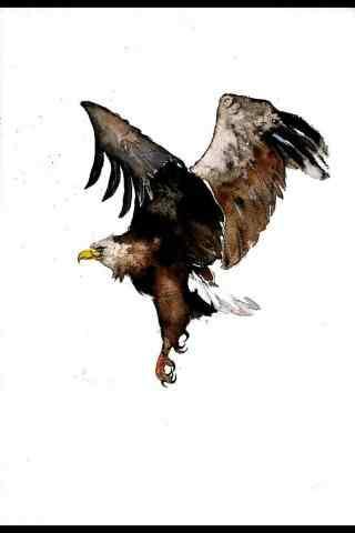 手绘老鹰图片手机壁纸