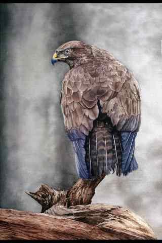 手绘苍鹰雄姿图片手机壁纸