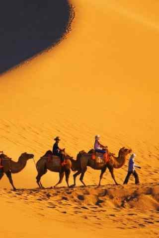 沙漠中的骆驼手机图片