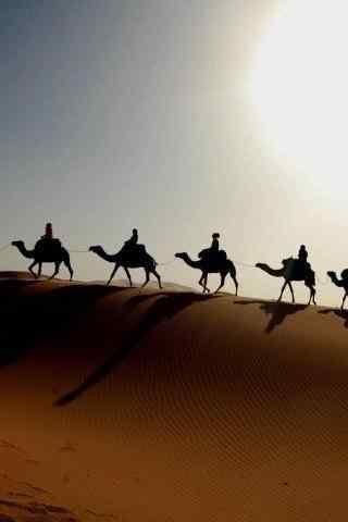 沙漠骆驼行走队伍手机壁纸