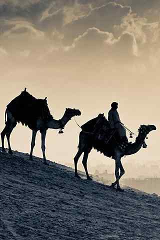 沙漠骆驼剪影手机壁纸
