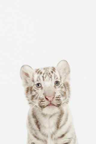 手绘小老虎图片手