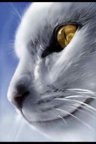 手绘猫咪头像手机壁纸