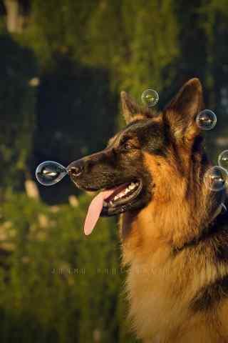玩泡泡的狼狗手机