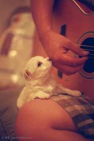 听主人弹吉他的小