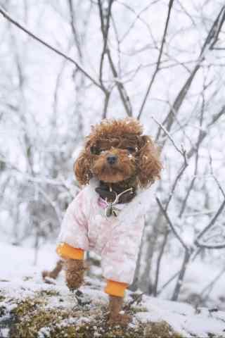 在雪地中玩耍的泰