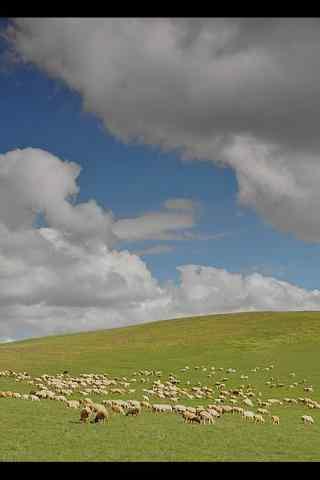 小清新草原羊群手机壁纸