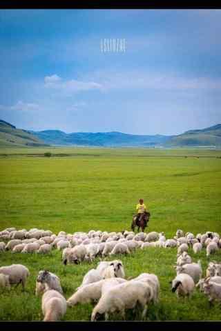 草原上的羊群们手机壁纸