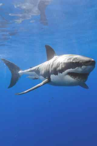 深海下大鲨鱼手机
