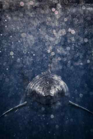 面向你游来鲨鱼手