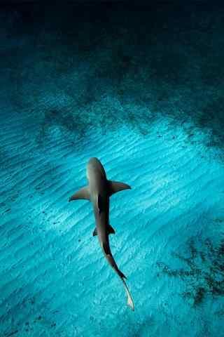 深海下的大鲨鱼手