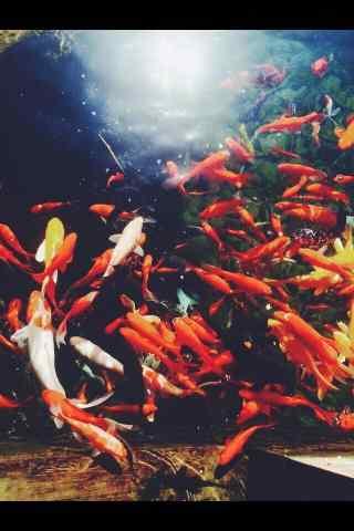 池中唯美小清新锦