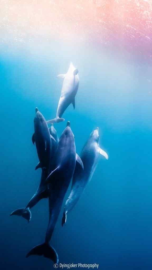 深海下簇拥在一起海豚手机壁纸