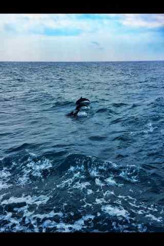 海豚们一起在水中翻跃手机壁纸